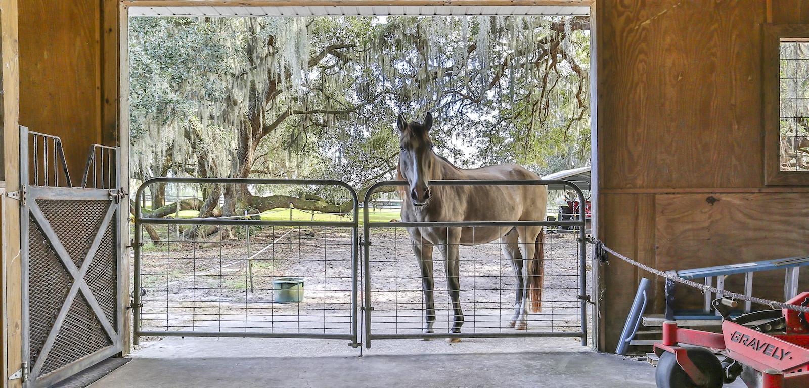 Ranches - Horse